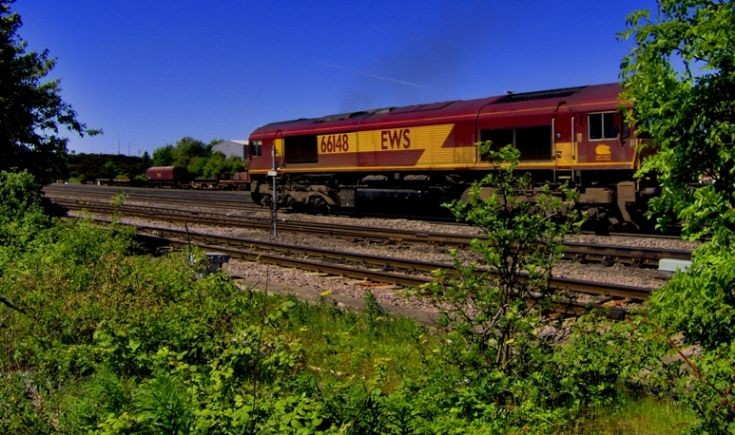 Class 66 hides in the undergrowth - 66148
