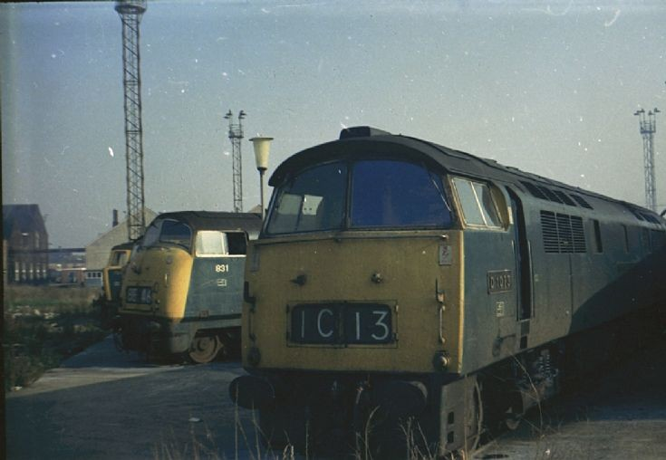 D1073 and (D) 831
